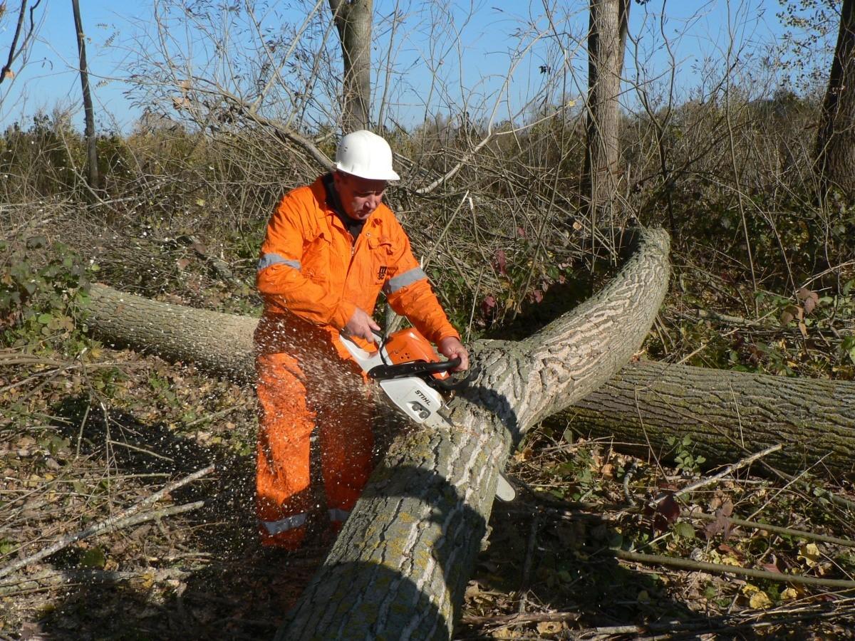 Operator la recoltarea si toaletarea arborilor forestieri evaluare competente